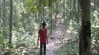 DEBA IN BANKURA FOREST