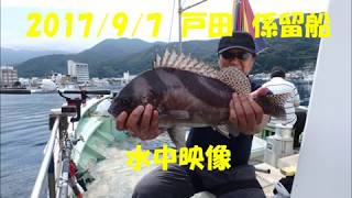 戸田港 ちどり丸 係留船  水深30m 水中映像