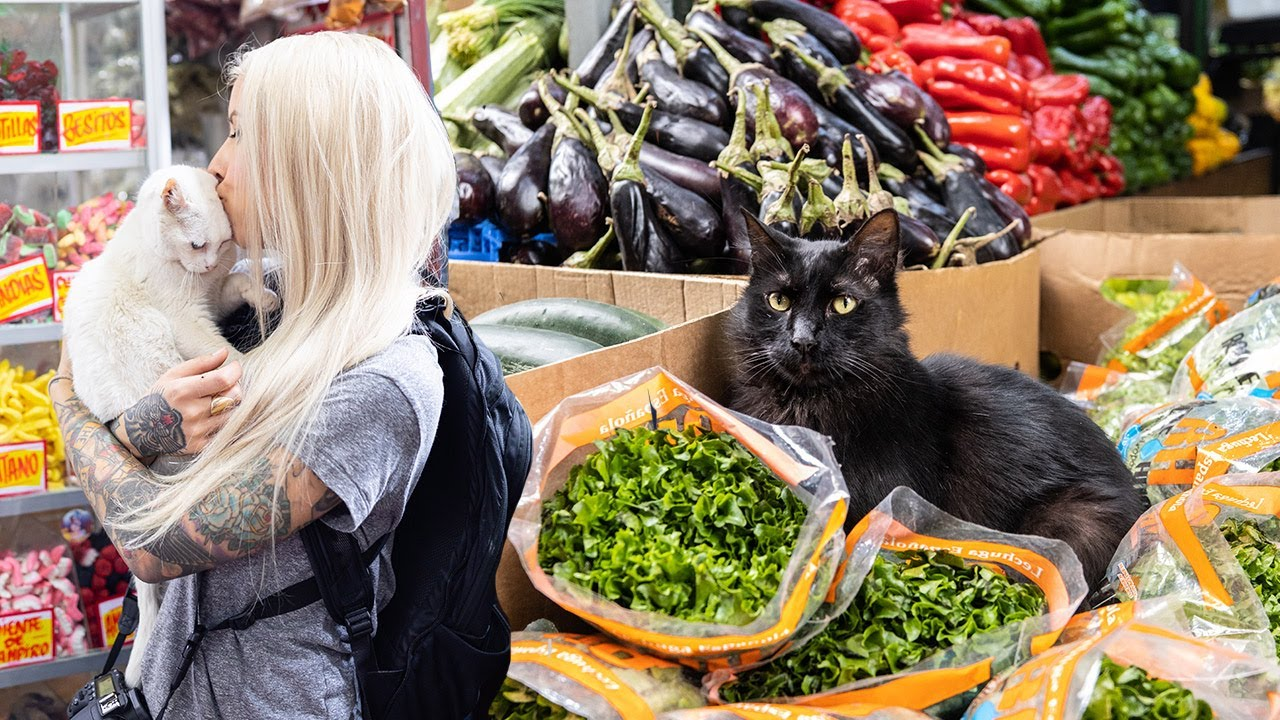 The Amazing Market Cats of Chile (Gatos de la Vega!)