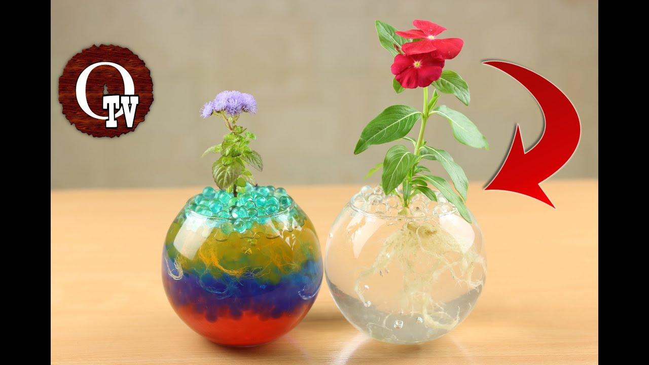 Как называются цветы шариком