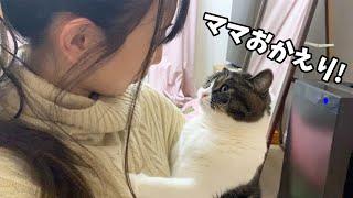 仕事で疲れたママをお出迎えしてくれる猫