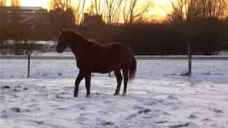 Polly et la bataille de boule de neige