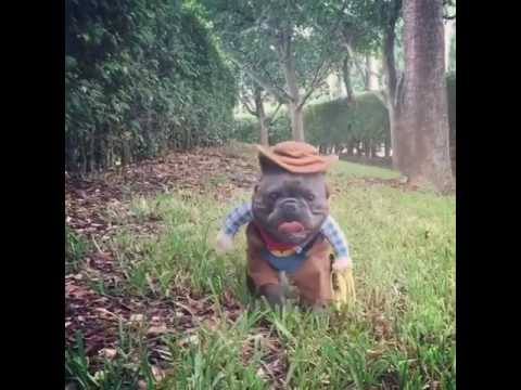 Cowboy French Bulldog Youtube