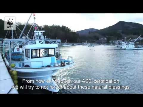 Miyagi Prefecture Fisheries Cooperative Oyster farms earn ASC certification