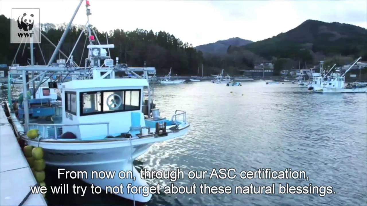 Miyagi Prefecture Fisheries Cooperative Oyster Farms Earn Asc