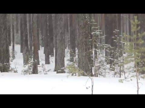 Леший, видео жителей г. Катав-Ивановска