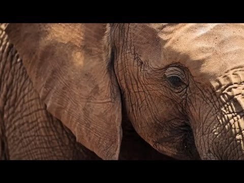Stop Wildlife Crime: The Series | Preview