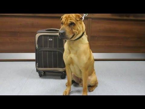 Dog found abandoned next to suitcase full of belongings