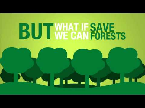 Forest Conservation Facts Information Pictures