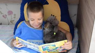 Poodle is reading a book instead of going to the bath
