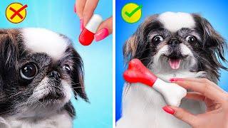 لطيف جداً !15 ابتكار غريب للحيوانات الاليفه !
