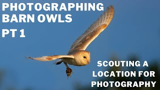 BARN OWL PHOTOGRAPHY   HOW TO CHOOSE A SUITABLE SITE   TIPS FOR SUCCESSFUL BIRD PHOTOGRAPHY PT 1