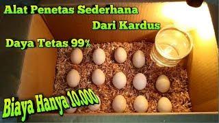 Gambar cover Alat Tetas Telur Ayam Sederhana Dari Kardus
