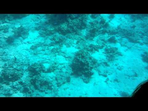 Рыбы Красного моря - фото с названиями и описанием