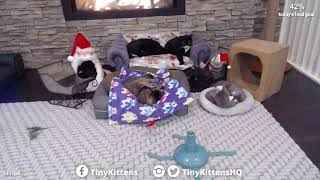 Cassidy the Miracle Kitten ends the year with good choices!  TinyKittens.com thumbnail