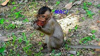 Super Cute Baby Maci Eating Rambutan, Best Self Feeding & Supporting, Lovely Maci