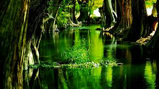 ☽ Beautiful Night Sounds Frogs, Birds, Cicadas, Owls 1 hour