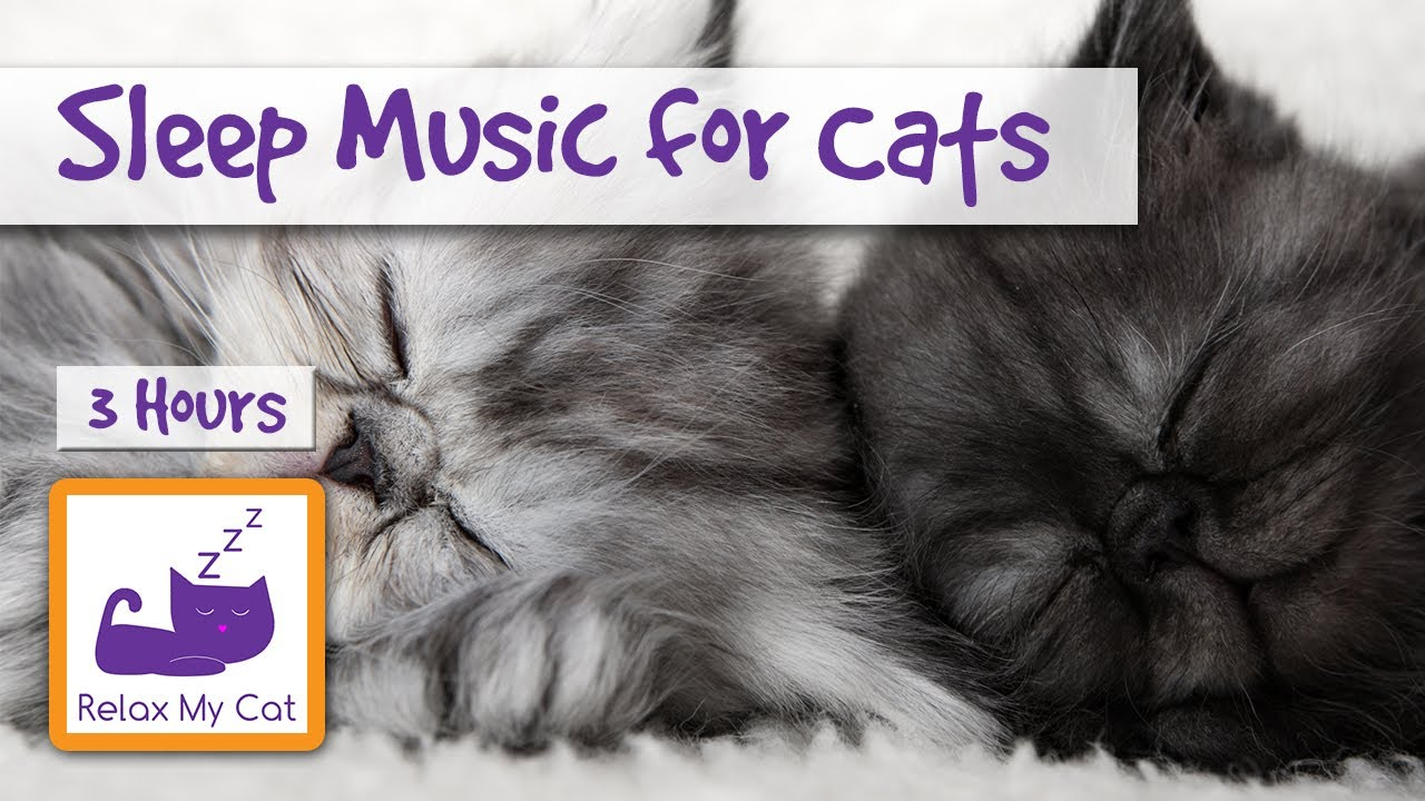 Hours Of Relaxing Cat Music