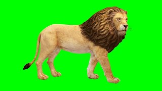 Copyright Free 3d Animated Lion Green Screen Effect | Chroma Key | Royalty Free |