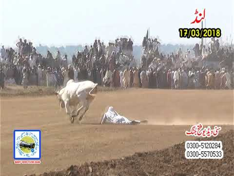 Bull Race In Pakistan Sunny Video Fateh Jang 17 3 2018 Lund