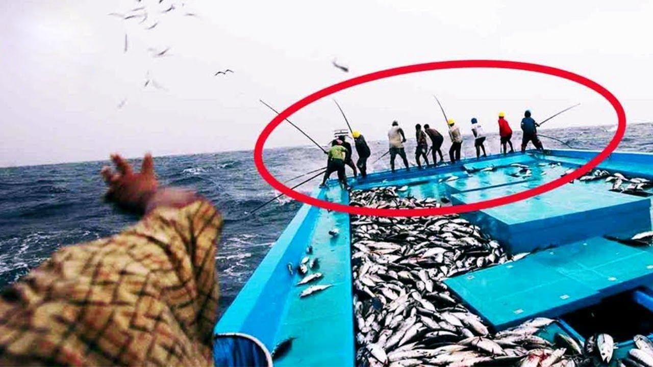 لحظات لا تعاد مرة أخرى  تم تصويرها أثناء صيد الأسماك .. شيء لا يصدق!!