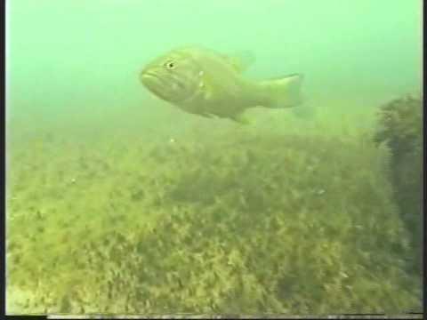 Lake Erie Diving at Kelleys Island, Ohio