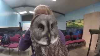 Owl Encounter at Eagle Heights (60 sec review)