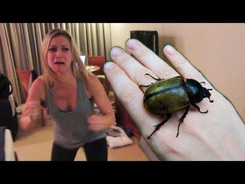 HUGE HISSING BEETLE PRANK