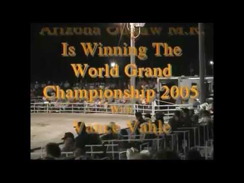Arizona's Outlaw M.R.- Missouri Foxtrotter Stallion wins 2005  3 years old World Grand Champion.