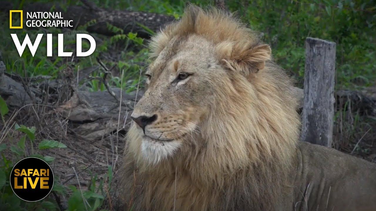 Safari Live - Day 293 | Nat Geo Wild