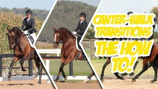 HOW DO I TRAIN CANTER-WALK TRANSITIONS - Train with Tash