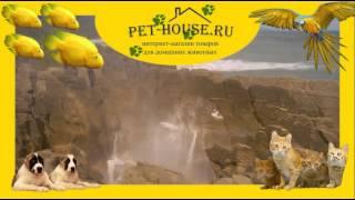 Интернет зоомагазин, купить корм и товары для домашних животных  на PET-HOUSE. ru(Наша миссия: Мы помогаем цивилизованно содержать животных в городских условиях. С 2002 года мы экономим Ваше..., 2014-03-24T16:49:22.000Z)