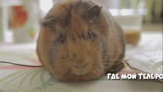 Смешные видео про животных |  Funny video about animals