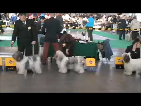 word dog show