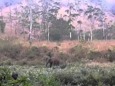 elephant attack in idukki 2013 February kerala - YouTube