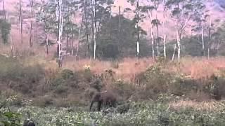 elephant attack in idukki 2013 February  kerala