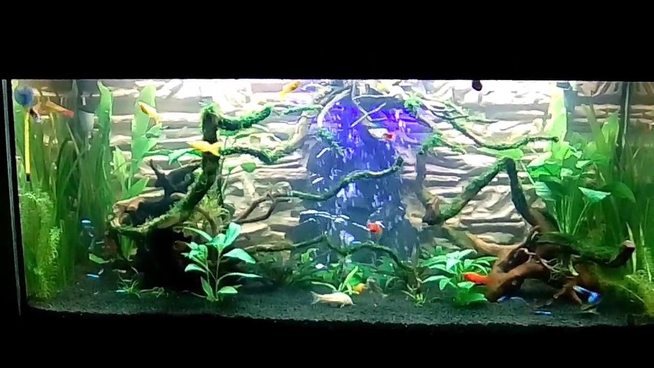acquario comunità con bolle di aria. - youtube - Bollicine Acquario Fai Da Te