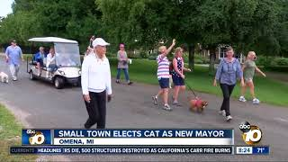Small town elects cat as new mayor