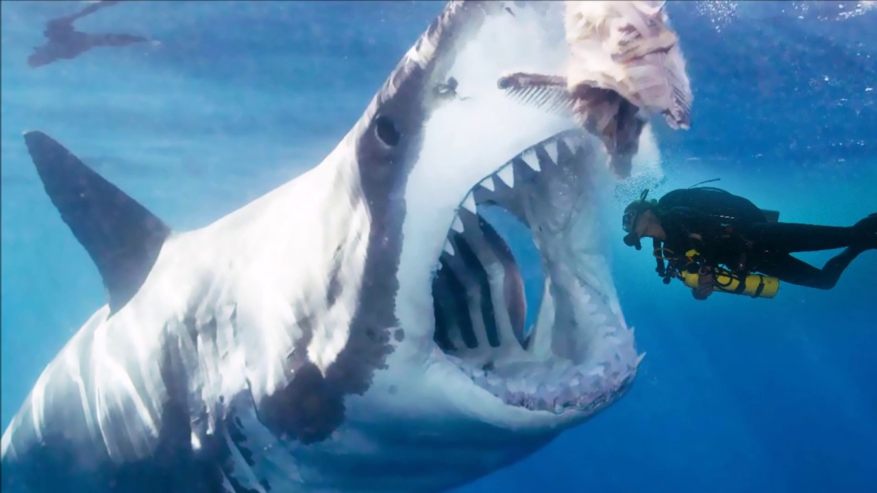 Megalodon Real Life | www.pixshark.com - Images Galleries With A Bite!