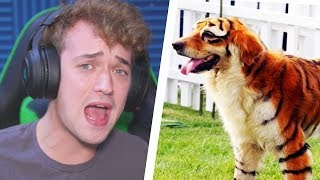 THESE DOGS ACTUALLY EXIST?! THE RAREST PUPPIES IN THE WORLD!!