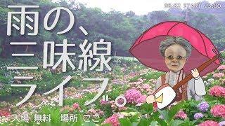 [LIVE] 雨のVB三味線ライブ。