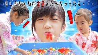 もしもねぇねが金魚すくいの金魚を食べちゃったら・・・? thumbnail