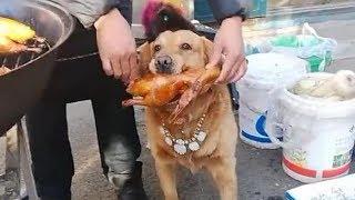 金毛路过肉摊就不走了,非让主人给买烤鸭,如愿了就开心啦!