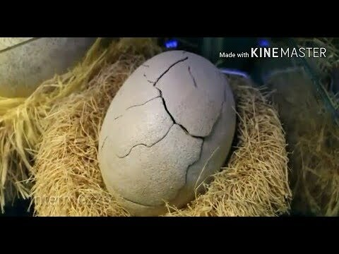 Percaya Gak Percaya || Telur Naga Ini Menetas