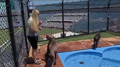 Jaguars in-stadium dog park set for preseason kickoff