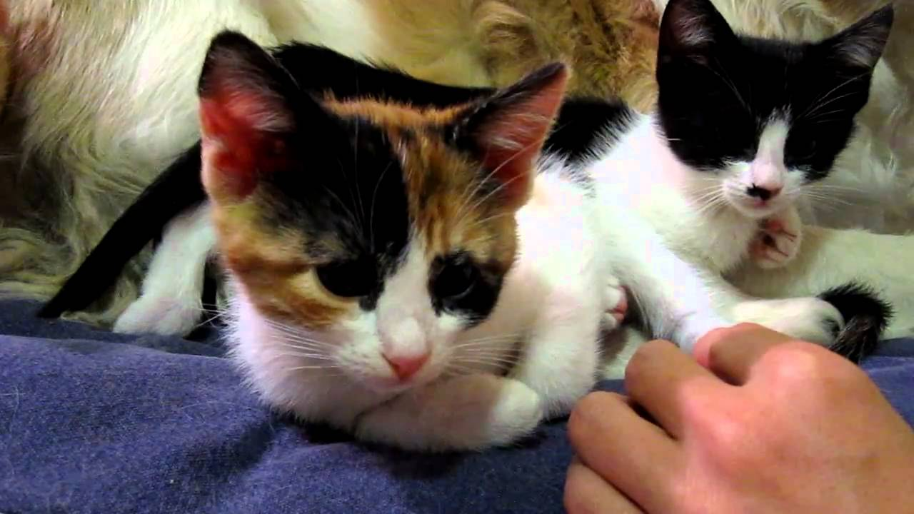 To lovers of cats. How to prune a cats claws