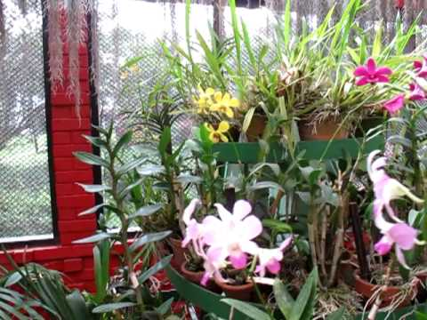 Peradeniya botanical gardens greenhouse kandy sri lanka for Indoor garden designs in sri lanka