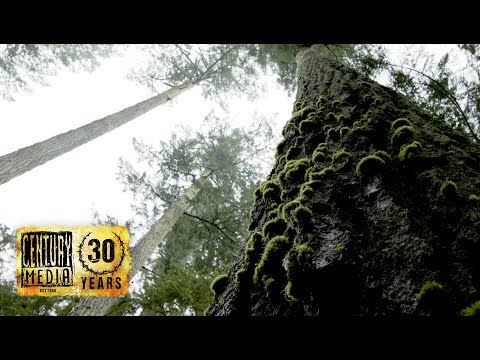 HEXVESSEL - Old Tree (OFFICIAL VIDEO) Mp3