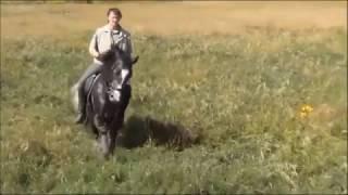 С днём Рожденья. Ролик для Михаила Кизимова. Конный спорт.