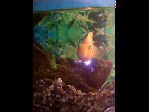 Камни рыб, драгоценные камни для знака зодиака рыбы